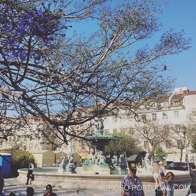 test ツイッターメディア - 急に暑くなってきたリスボンでは、ロッシオ広場のジャカランダが咲き始めました。 #リスボン #ポルトガル https://t.co/IiATtEYWih