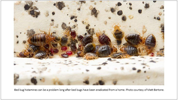 test Twitter Media - Bed Bug Histamines Are Substantial, Persistent in Infested Homes https://t.co/29AtjMnVCN https://t.co/e0Z3xaEMDb