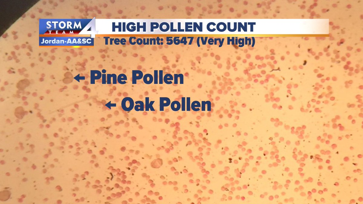 At The Allergy Asthma Sinus Center Sent Us This Picture Of High Pollen On A Microscopic Level Magnified 40x Mold Counts Are As Well