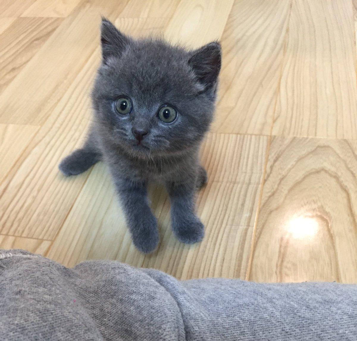 素敵なタグを見つけたので   #これ見た人は子猫が成長した画像貼れ