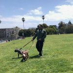 Image for the Tweet beginning: ICYMI: Dolores Park Dog Attack