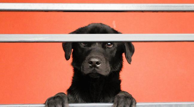 Atteinte du syndrome de Diogène, la quinquagénaire vivait avec 44 chiens https://t.co/4rSUjSbXMq #Spa #Chien