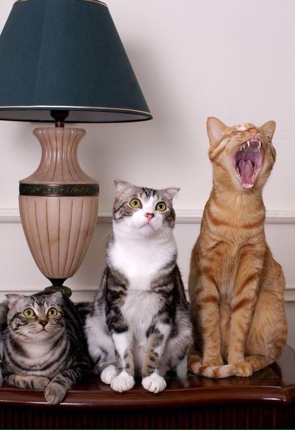 Хорошего дня, прикольные картинки три кота