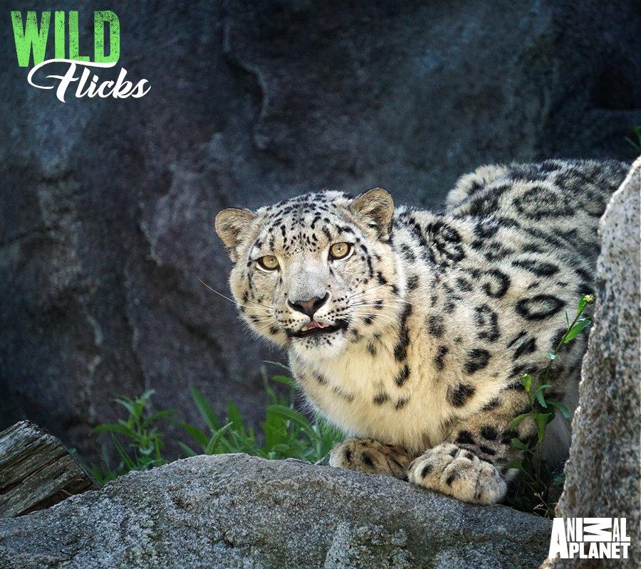 Animal Planet India on Twitter: