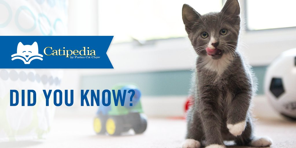 Thinking of adopting a cat? You may want to snag a few things before you bring your new BFF home. Luckily, our handy checklist can help you get started.  https:// puri.na/2GVs5GZ  &nbsp;  <br>http://pic.twitter.com/VOwVIg3DDr