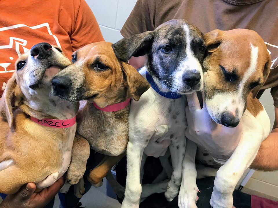Pet Alliance Orlando On Twitter These Are Just A Few Of The