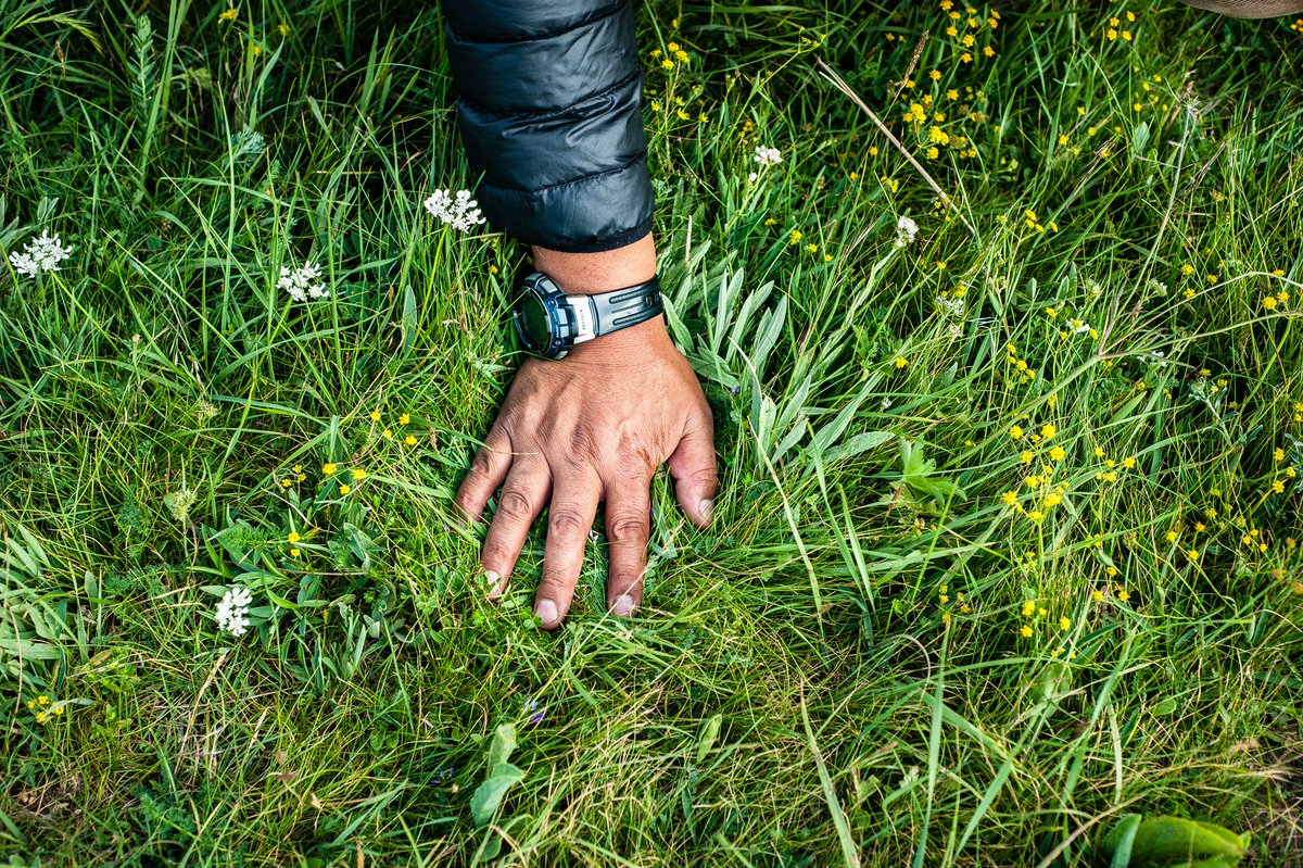 "RT @emergence_zine ""Tradition says that when you place your hand on the pasture, you can count twelve to twenty different varieties of grass and flowers. This means the grassland is very healthy."" —Palzang, from the Ma Chu area of Amdo,Tibet. Photo essay by Diane Barker. https://t.co/OxNB83NBrk"
