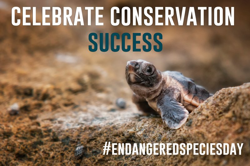 Today is #EndangeredSpeciesDay!  Join @endangered & celebrate the successes achieved thanks to the Endangered Species Act.  https://t.co/zFypHZYzc5#StopExtinction