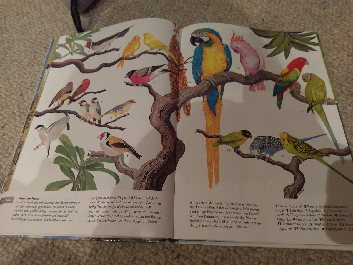 Astounding Wellensittich Töne Gallery Of These #birds Are My Favourite Page. In