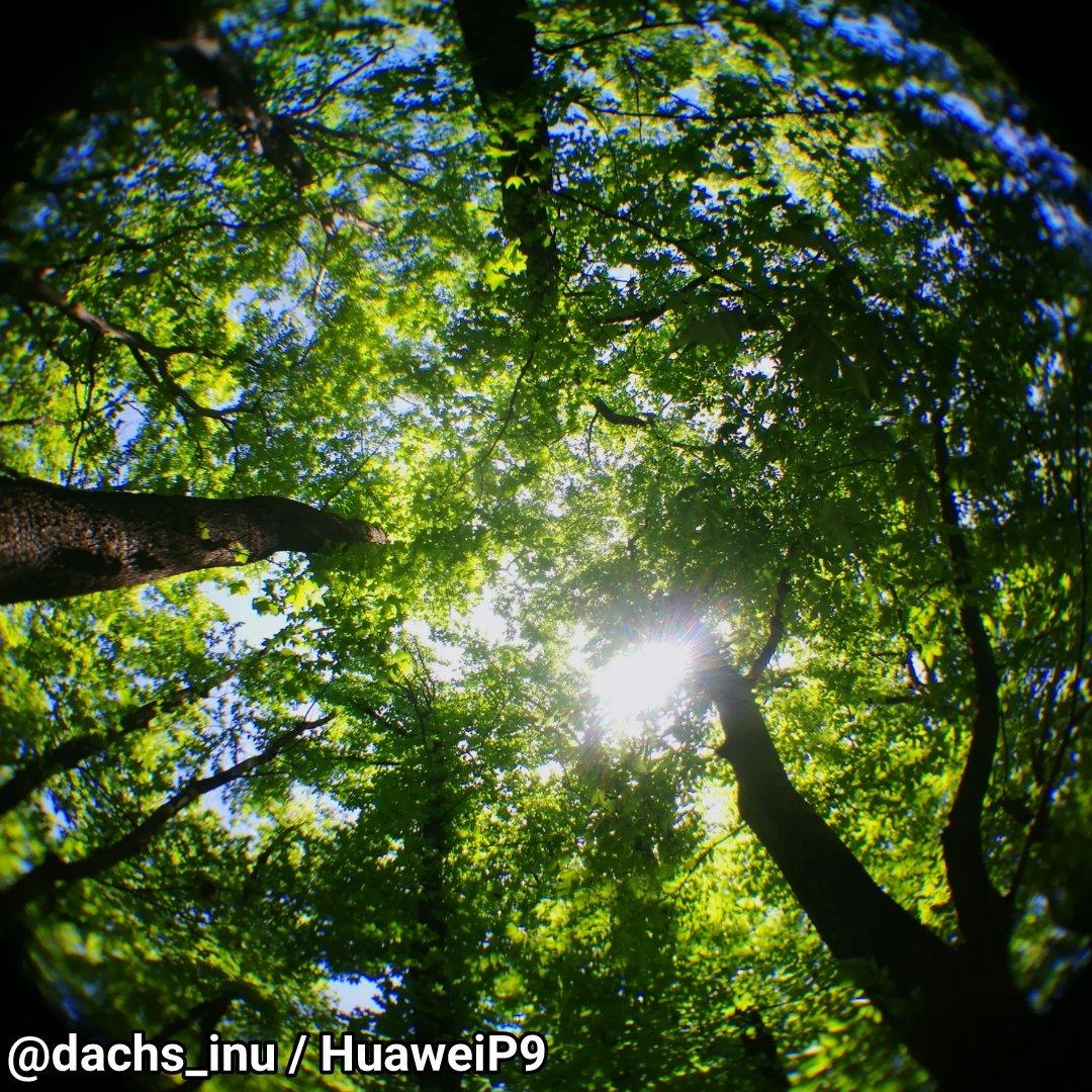 test ツイッターメディア - #キャンドゥ の #魚眼レンズ #お写ん歩 続き。公園の林にて??。 寒い?? https://t.co/himNy67DUH