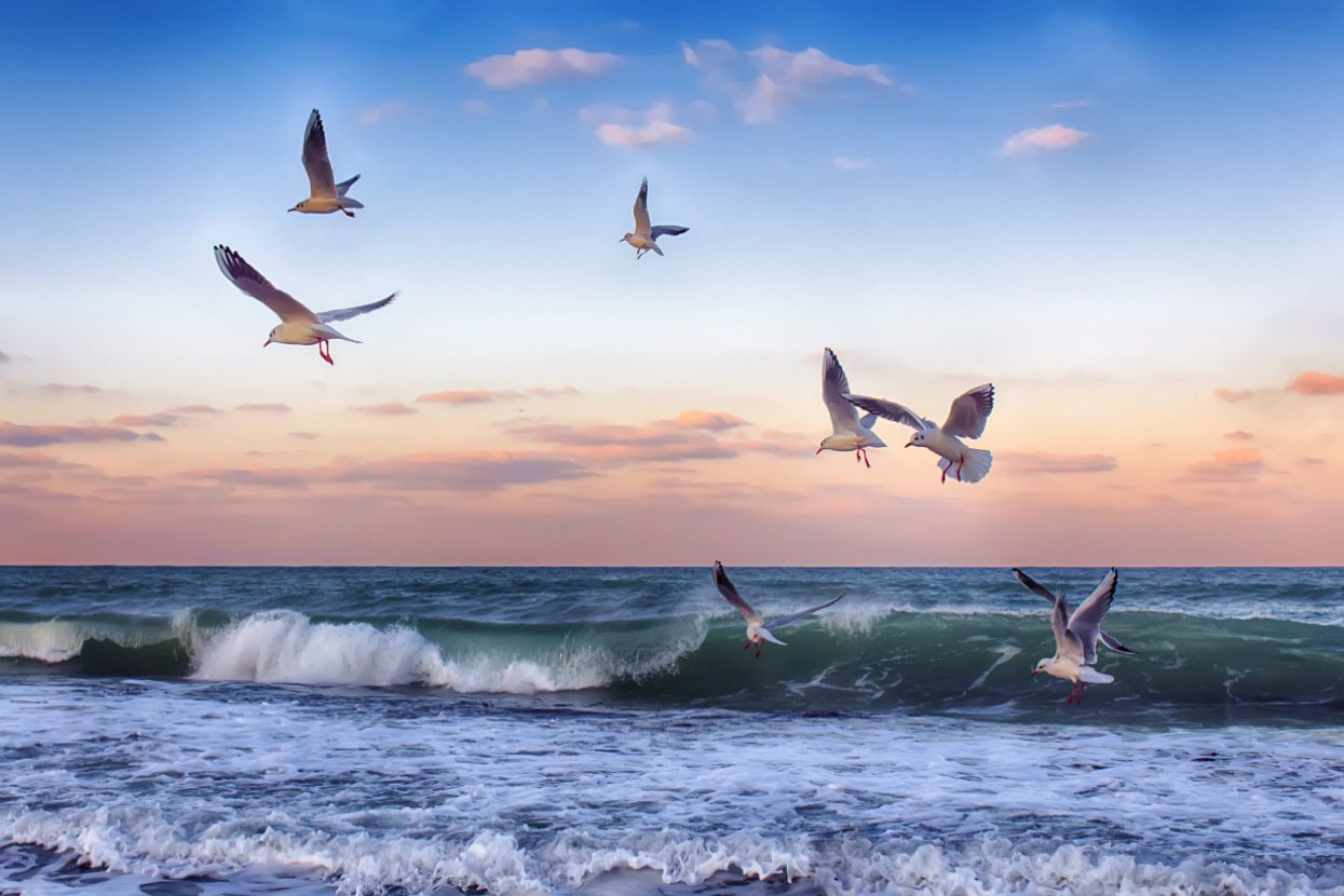 Открытки море и чайки