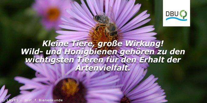 #weltbienentag Foto