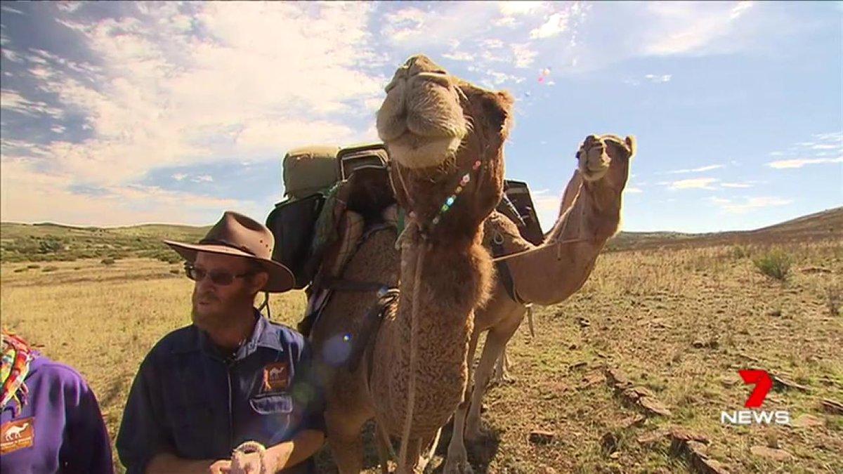 Image for the Tweet beginning: An intrepid Flinders Ranges couple