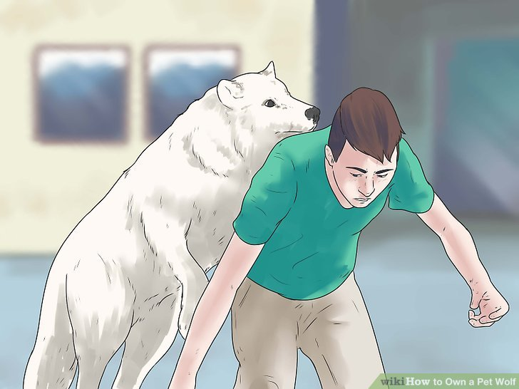 how to act like a wolf 14 steps with pictures wikihow