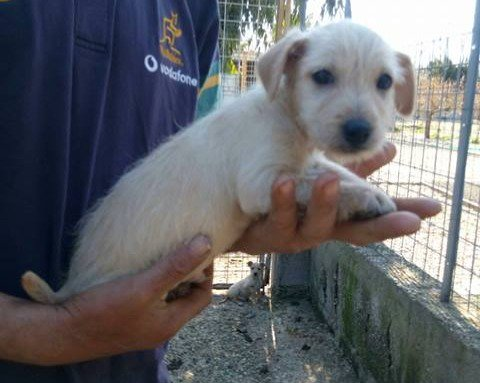 Annunci Animali On Twitter Roma Cream Incrocio Jack Russel