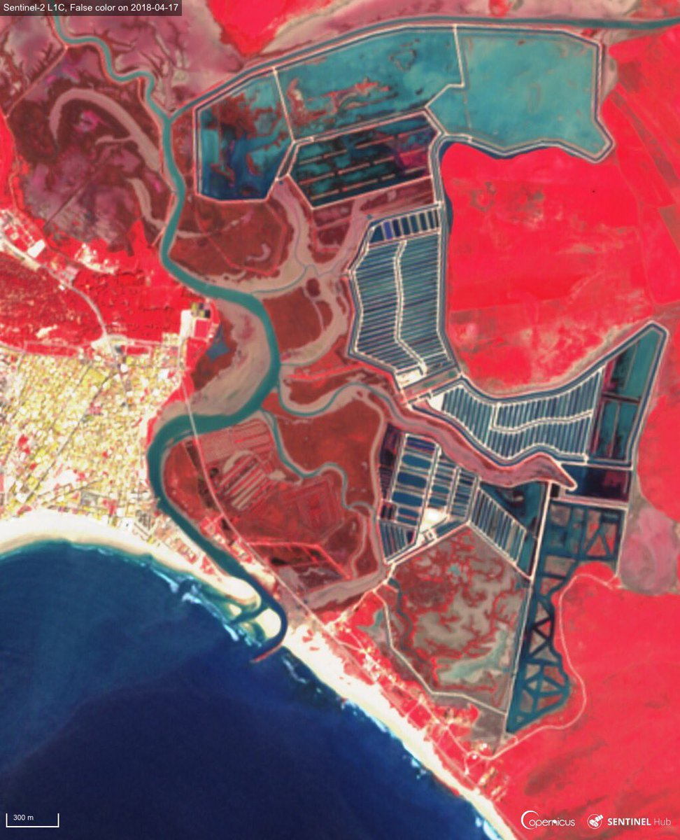 #Sentinel2 #OpenData for #ecosystems monitoring The La Breña &amp; Barbate Marshes Natural Park south west of Cadiz . It is endowed with a diverse set of ecosystems: marine systems, salt marshes, pine woods and cliffs False colour images from 17 avril<br>http://pic.twitter.com/Gb2jM2J9Wf