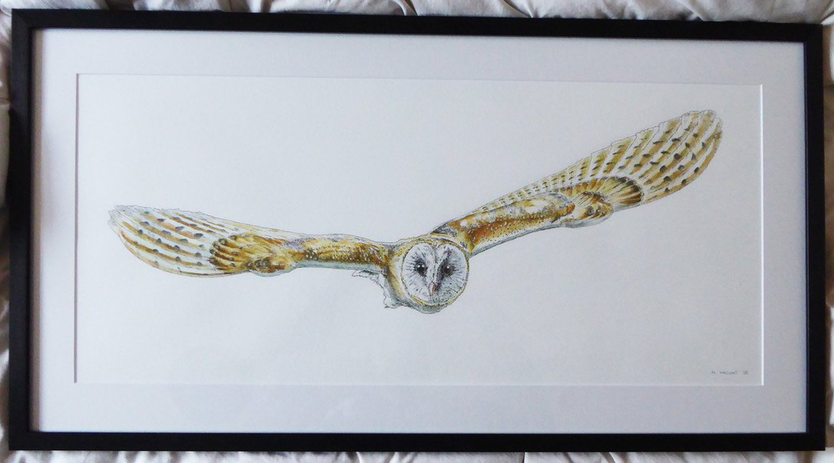 Got my big Barn Owl drawing famed recently but at about 3.5 feet across I  didn&#39;t have any way to display it at the art fair I did yesterday,  think I&#39;m going to need a bigger easel #jaws #HandmadeHour #drawing  #crafthour #INK #art #art #artist #illustration #pen #artwork #ink <br>http://pic.twitter.com/16u45eqoVD