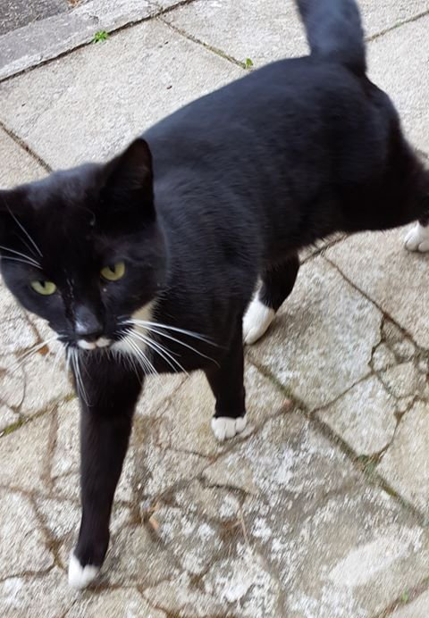 FOUND. Help! Young black &amp; white female cat found in the Shawlands area of Glasgow. Details  https:// bit.ly/2GBxVrY#found  &nbsp;   #glasgow <br>http://pic.twitter.com/fJqTI6wpo3