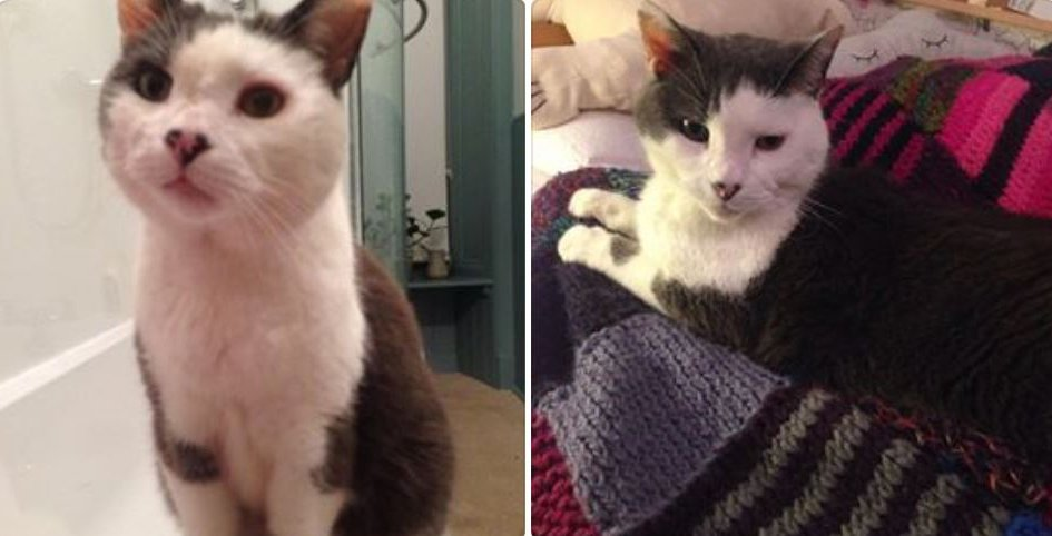 LOST. Help! Monty, a 13-year-old, grey &amp; white male cat is missing from Hyndland, Glasgow. Details are here  https:// bit.ly/2IBbyZy  &nbsp;    #lostcats #glasgow <br>http://pic.twitter.com/IY40tiJbu2