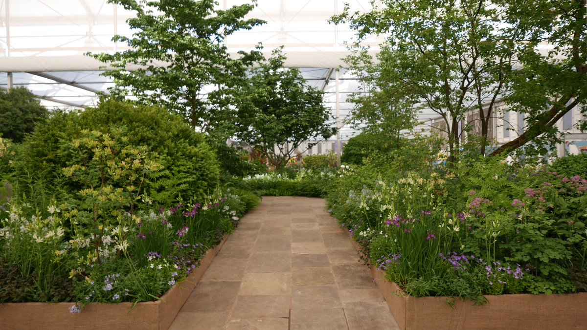 """rhs herbaceous plant committee on twitter: """"the chelsea flower show"""