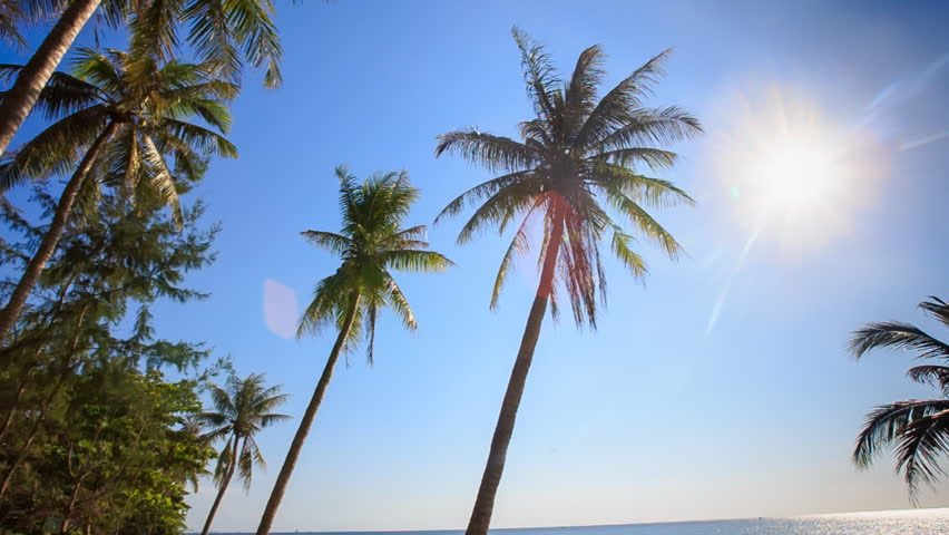 In case you forgot: here's what a sunny Miami looks like