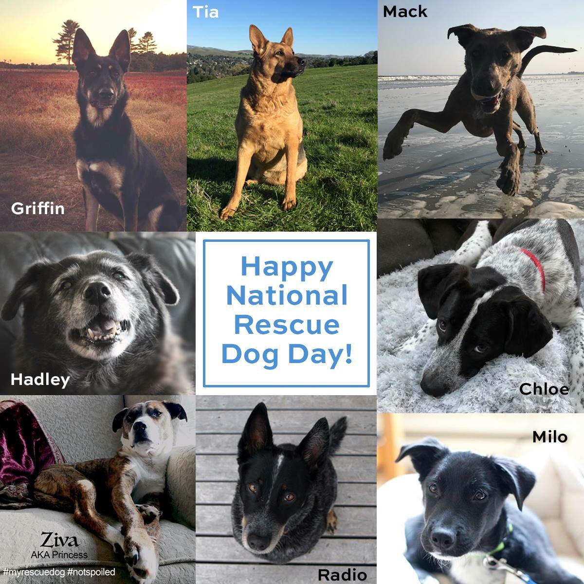 """Saving one dog will not change the world, but surely for that one dog, the world will change forever."" Karen Davison. Happy National Rescue Dog Day from the rescue dogs of Sellers Publishing! A happy, handsome bunch! #rescuedogs #rescuedog #nationalrescuedogday #companycanines"