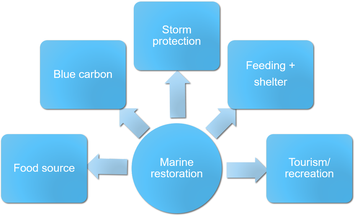 storm protection essay Atlantic storm protection provides a complete line of hurricane protection systems for your home or business we offer professional and knowledgeable assistance in designing a system to meet your.