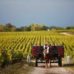 El viñedo y su clima son el alma mater de todos los #vinos. En este articulo te acercamos los de Burdeos https://t.co/1NzMHaMoso #vino #winelovers #Bordeaux