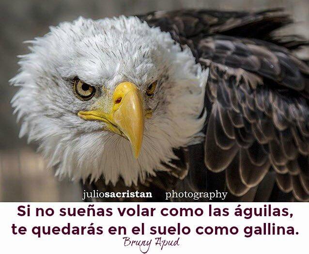 ο χρήστης Frases Bruny Apud στο Twitter Si No Sueñas Volar