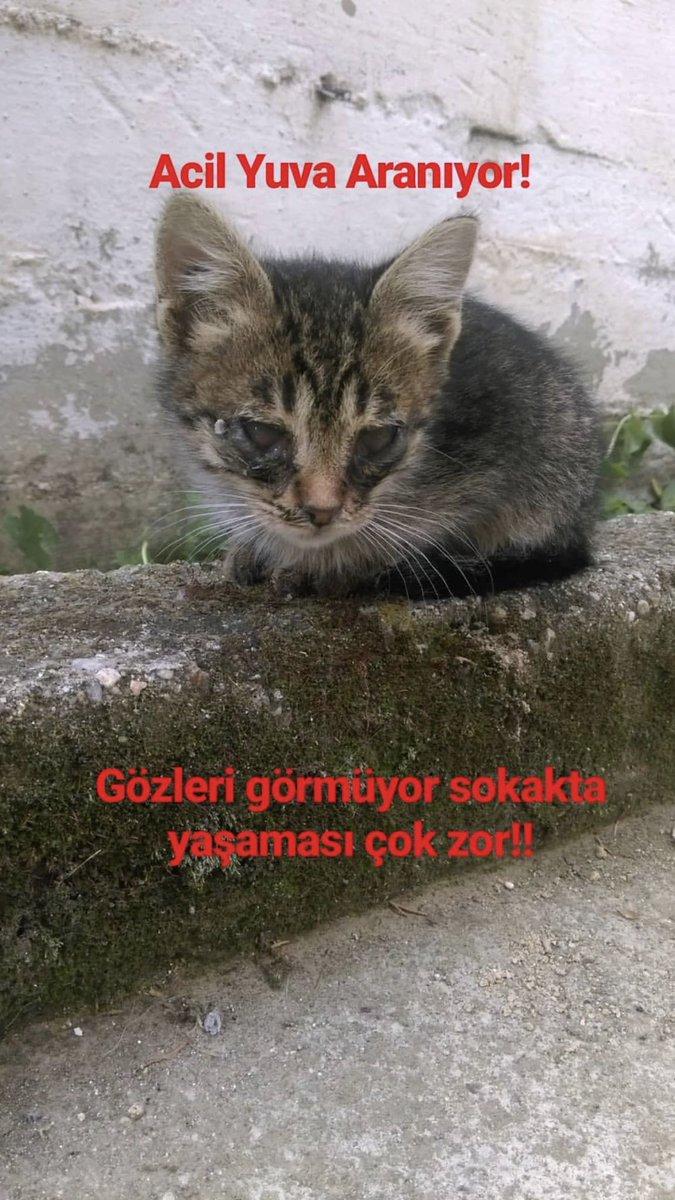 gizemc022 photo