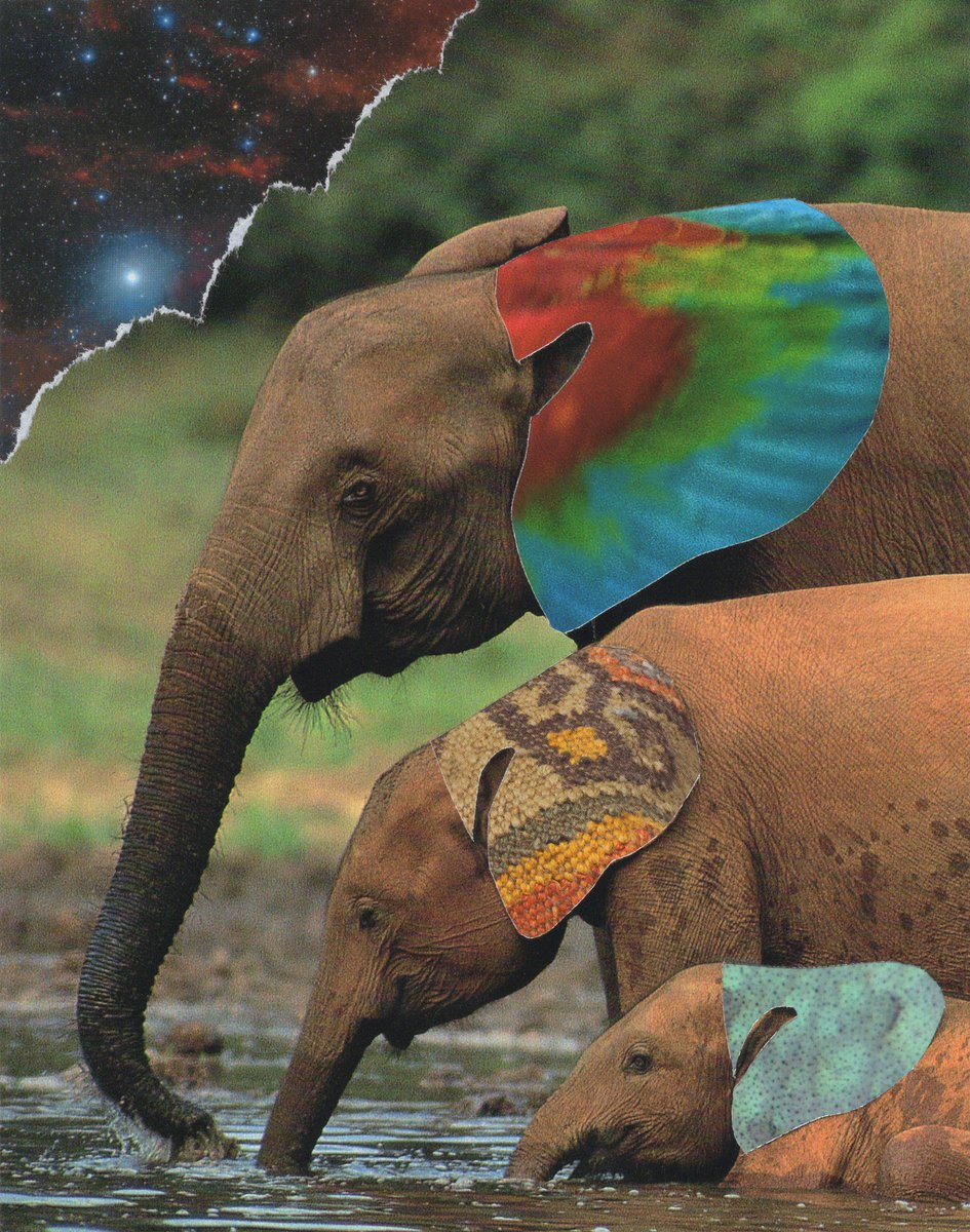 Living Colour  Handmade collage. Ear cuts are macaw, foot stool embroidery, octopus    #Elephant Facts: -largest land animal in the world -can live to be over 70 years old -the only mammal that can't jump -trunk has 40,000+ muscles in it  #collagetheworld #savetheelephants<br>http://pic.twitter.com/5ki3G6hgm0