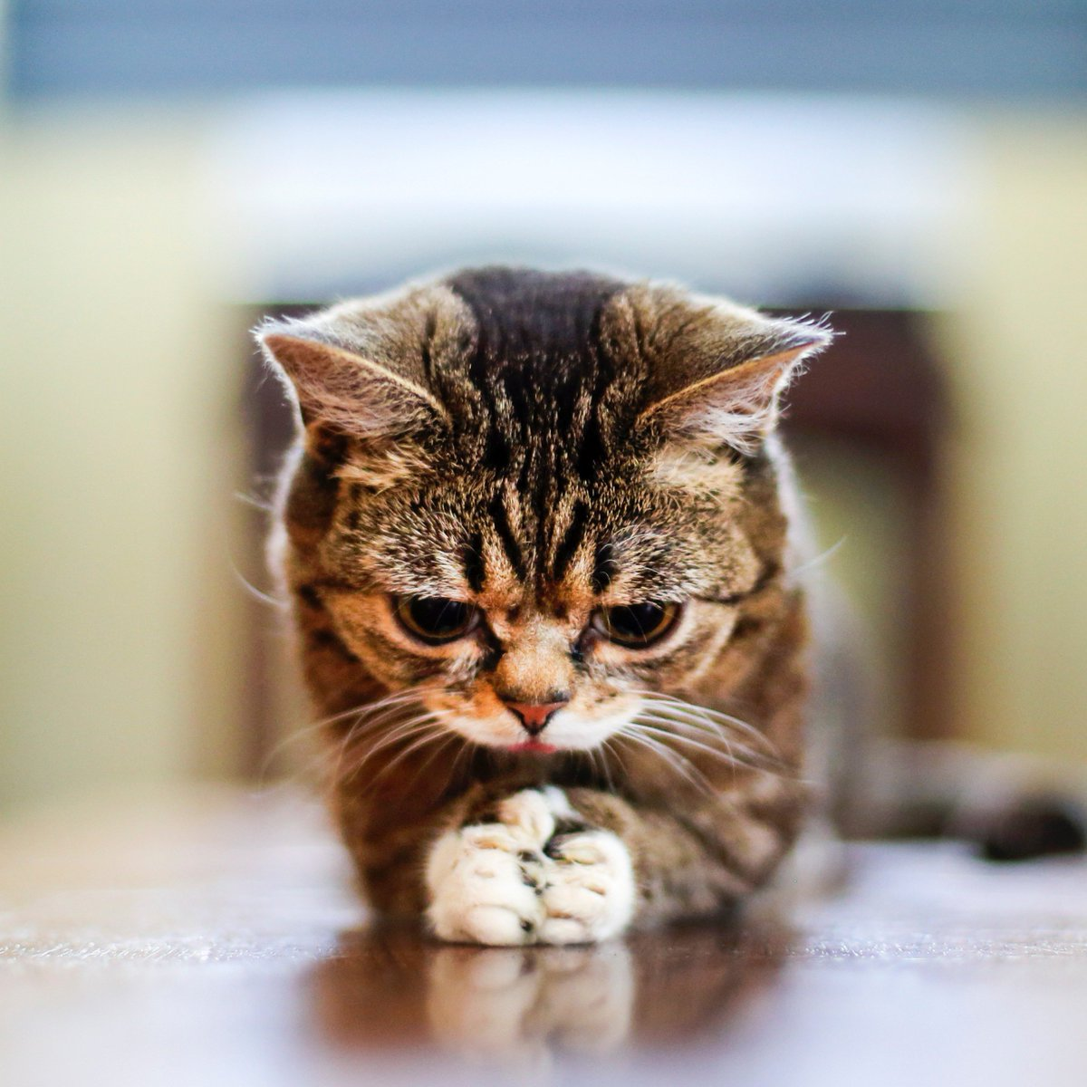 lil bub - photo #23