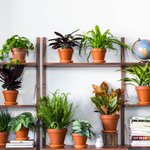 Where to buy plants online. https://t.co/wHfUYWTUkz