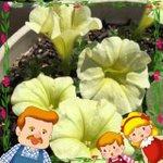 黄色いサフィニアさん(^-^) #マグァンプファミリーといっしょ #ハイポネックス園芸部 #ゆるキャラ