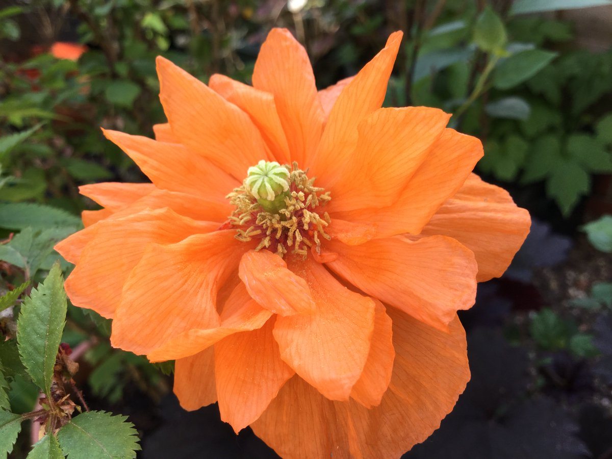 Rachel On Twitter Opened Yesterday Beautiful Double Orange
