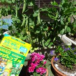 パキラも元気と載せてみる件。 何か当たるのか? 秘密の花園チャンネル 御用達(笑)  #マグァンプファミリーといっしょ #ハイポネックス園芸部 #ゆるキャラ https://t.co/kDBYl8WcU2