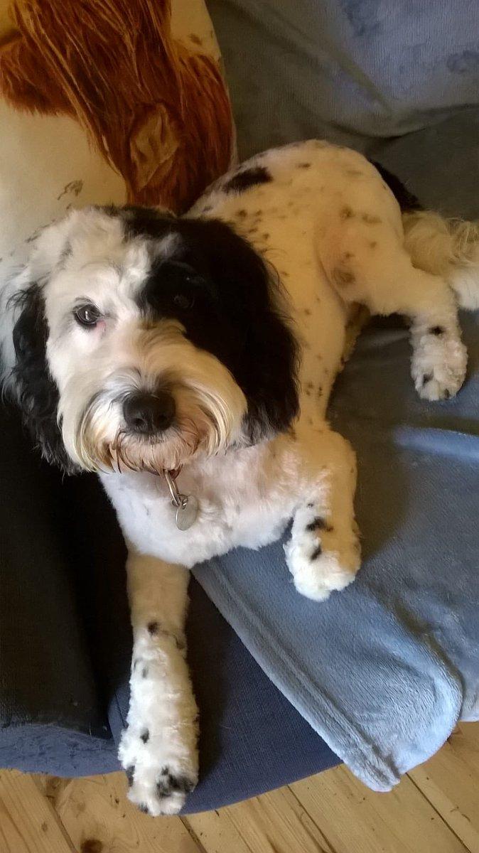 The Hound has had a haircut....