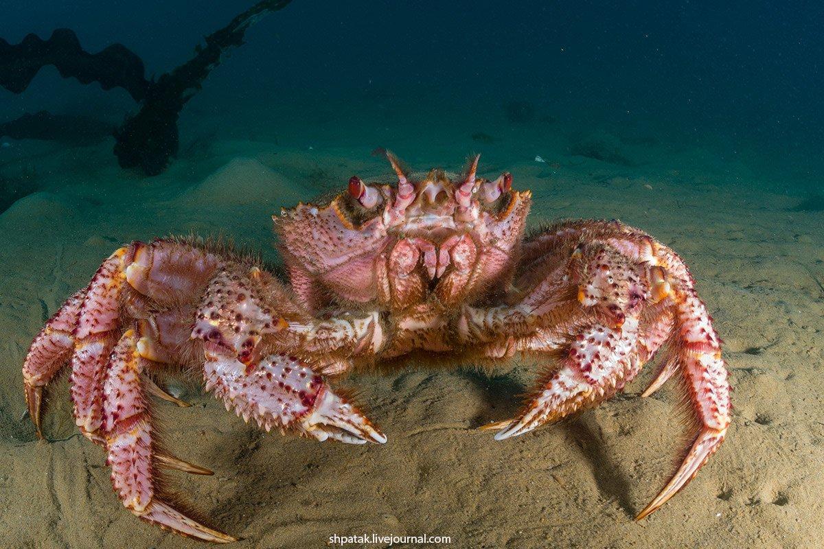 фото морских животных прим края время производства