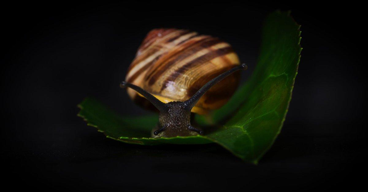 Snail portrait #WexMondays