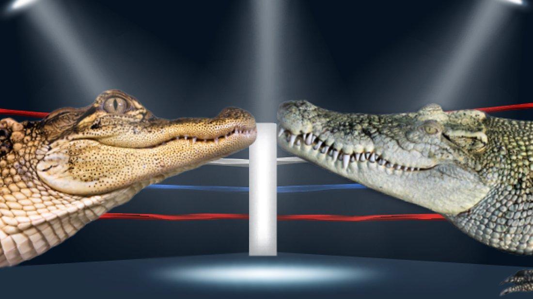 Чем отличается крокодил от аллигатора фото