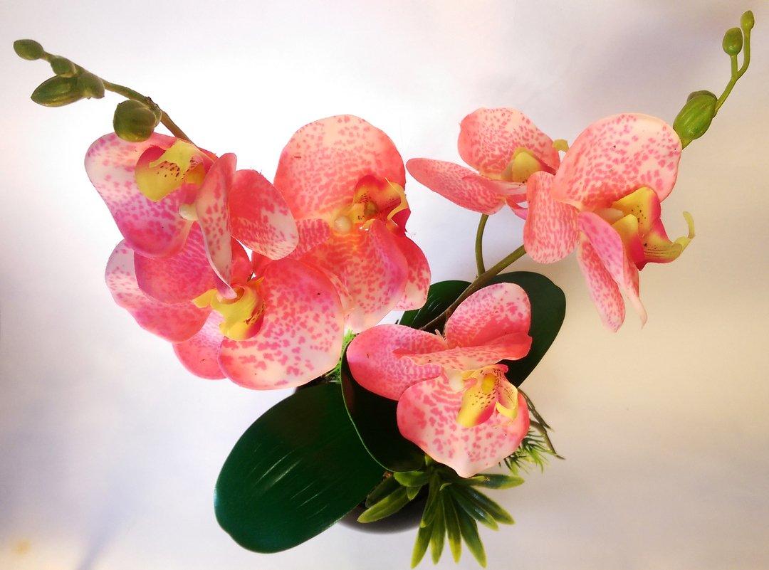 Самые красивые цветы орхидеи фото