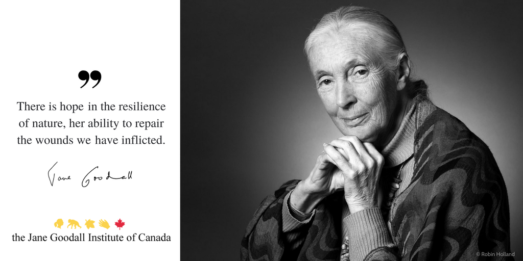 leadership profile jane goodall Jane goodall buy viagra online discount jane goodall is a pioneer in the field of primatology who has led the fight for better understanding of animals for over half a century when goodall set out in 1960 to study chimpanzees in tanzania, she was untrained in scientific methods but was well armed in empathy and understanding.