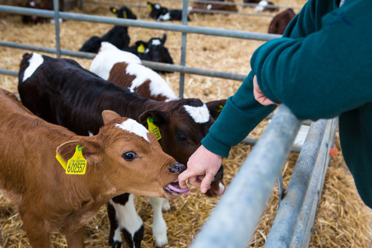 Home Farm is delighted to open its gates as part of Open Farm Sunday on 10th June. Meet the animals, learn about our organic history, sample our Goodwood cheeses, milk and beer and join in with lots of family activities! https://t.co/KRkNLjrg9E https://t.co/igHHO0Mwmt