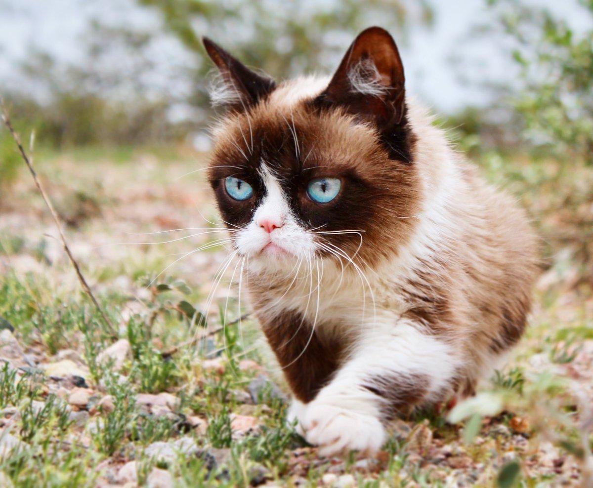 Grumpy Cat (@RealGrumpyCat) on Twitter photo 2018-06-05 06:07:27