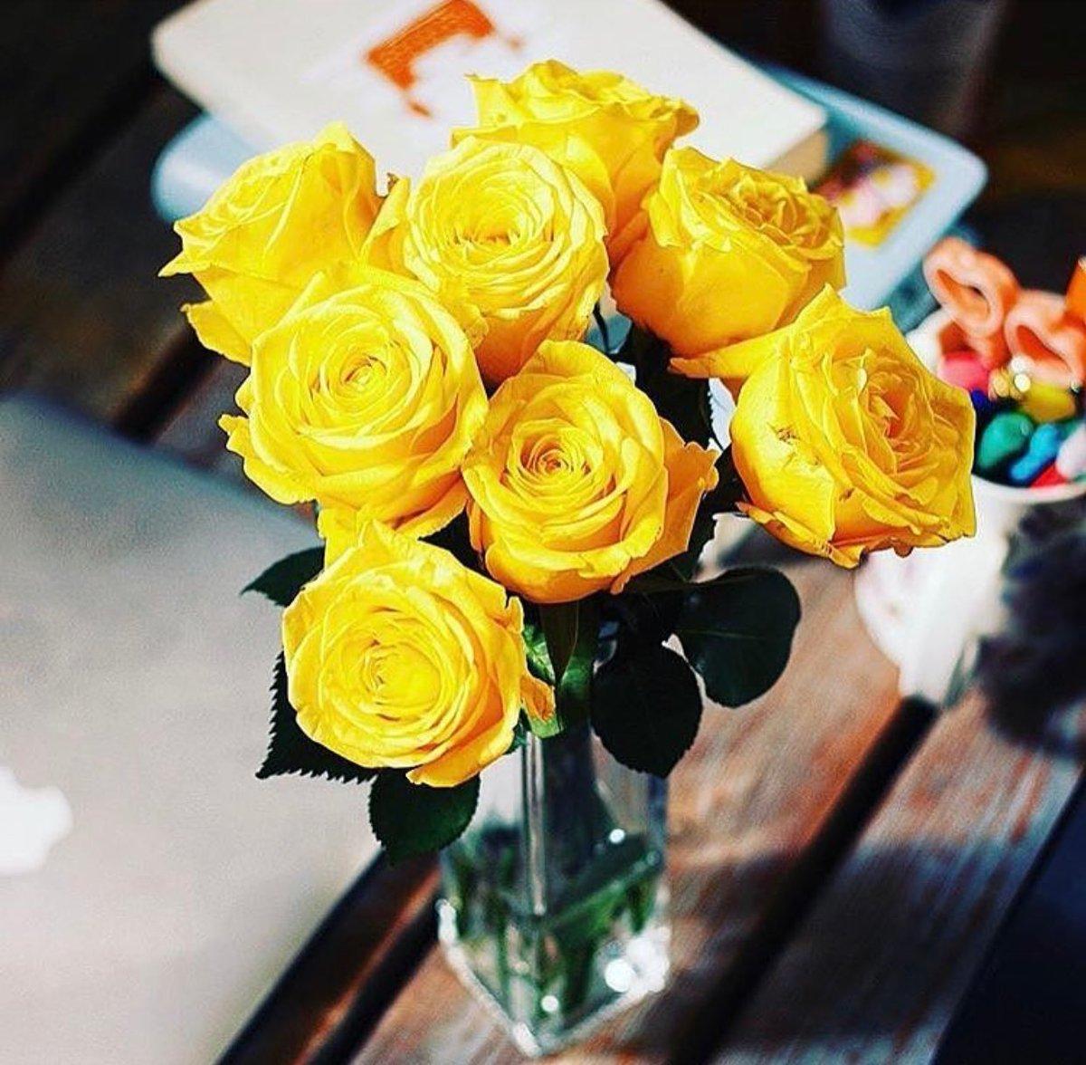 اقتباسات عن الورد الاصفر تويتر Aiqtabas Blog