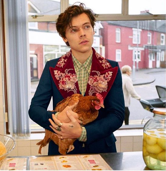 Gorgeous #HarryStyles Poses with Puppies and Chickens in New #Gucci Campaign!😍🔥🌟  https://t.co/C12d2QGUlf