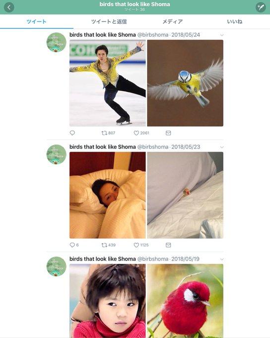 シンクロ率が半端ねぇwww スケート宇野昌磨選手とある動物の類似画像集が面白すぎるwww