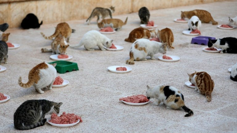 Stray #pets find a haven in war-torn #Aleppo