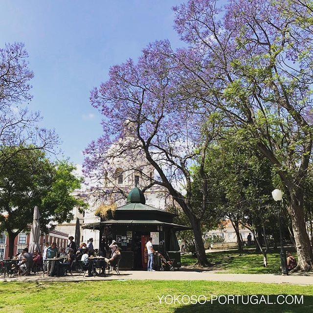 test ツイッターメディア - サンタ・クララのキオスクジャカランダ。パンテオンの白色に紫色が映えます。 #ジャカランダ #リスボン #ポルトガル https://t.co/ItfbqkfM72