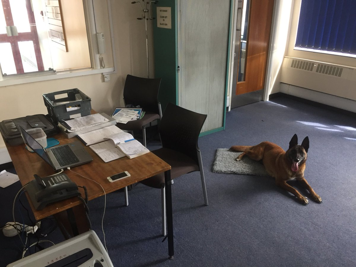 best office in the world. Desk With Laptop \u0026 Paperwork On It, My Dog Kai Sat Floor Next To Best Office In The World